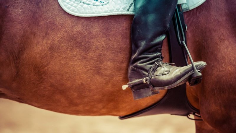 Equipo de equitación