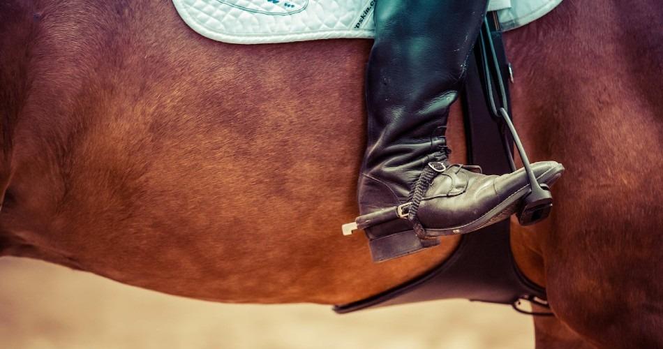 Encuentra todo el equipo de equitación que puedas necesitar a través de internet