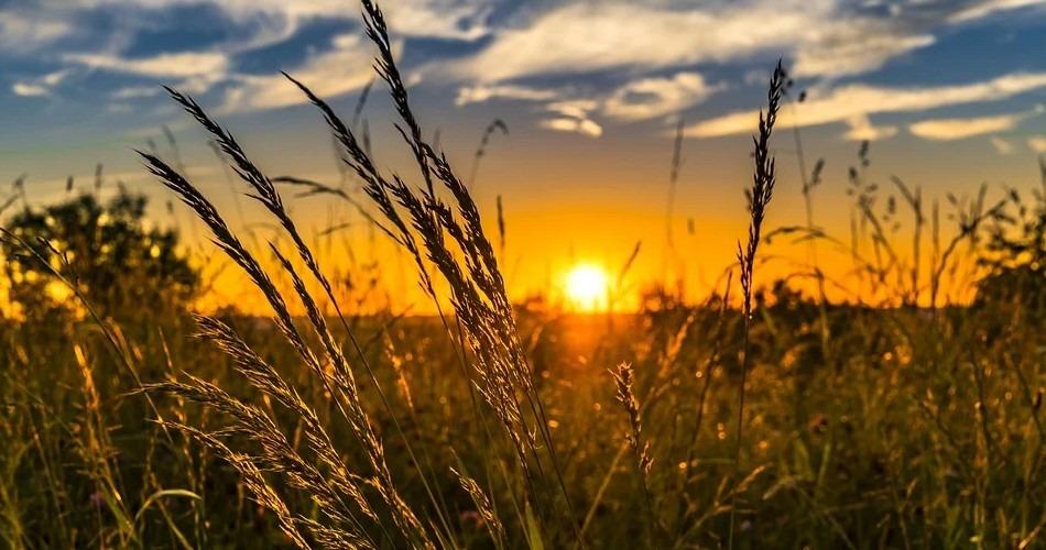 Agricultura, Pesca y Alimentación asigna los nuevos derechos de la Reserva Nacional de Pago Básico solicitados en 2020